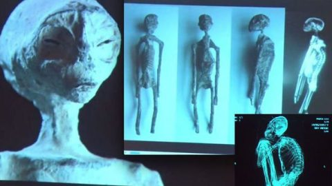 Astonishing Updates On The Potential Alien Body Unearthed In Nazca, Peru. Unlike Anything We've Ever Found