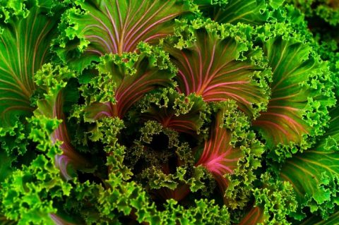5 Ways to Add Kale to Your Diet