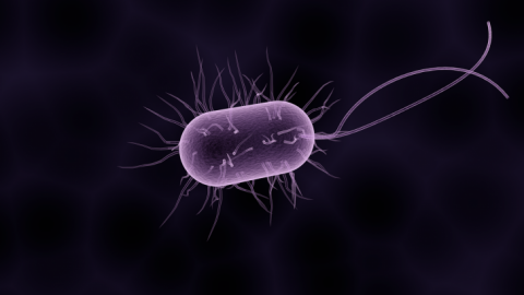 Gut Bacteria Triggers Physical Illness and Psychological Disorders