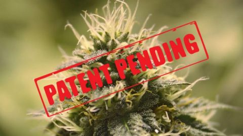 The Real Reason Big Pharma Wants to Own the Patents to Cannabis