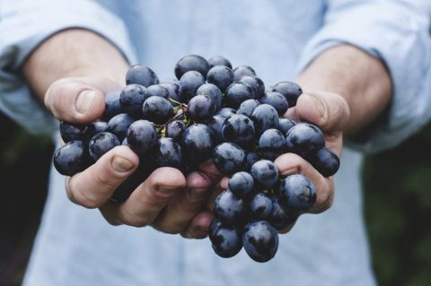Resveratrol and Grape Seed Extract Combination Very Effective at Killing Colon Cancer Cells, Study Reports