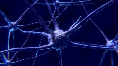 The Intriguing Link Between Brain Chemistry and Human Behavior