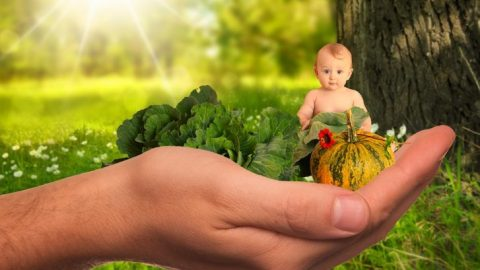 More Than Half of Baby Food Products Contaminated with Toxic Heavy Metals