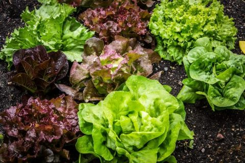 Eating Leafy Greens Significantly Improves Cognitive Performance