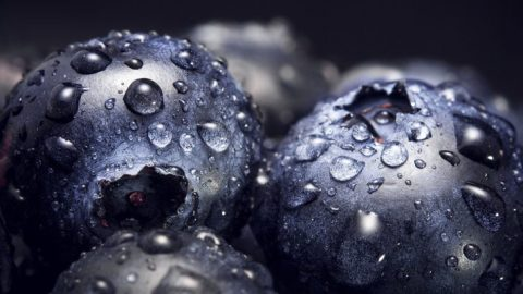 Blueberry Extract Outperforms Radiation in Killing Cervical Cancer Cells, Study Reveals
