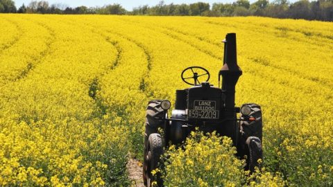 Canola Oil in the Diet Accelerates Brain Damage and Increases the Risk of Dementia