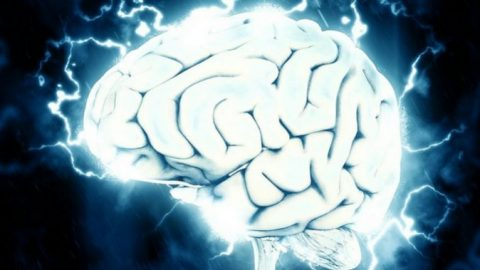 Watch: Scientists Recorded a Thought Traveling Through the Brain in Real Time