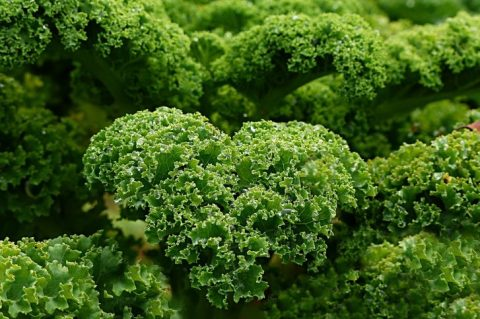Is Kale Your Friend or Foe?